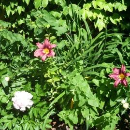 blooming003