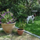 garden03may2015 (2)