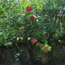 garden03may2015 (3)
