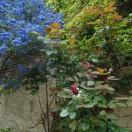 garden03may2015