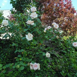 gardenmay (10)
