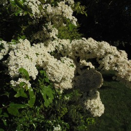 gardenmay (13)