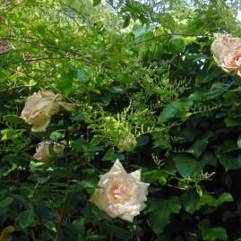 gardenmay (14)